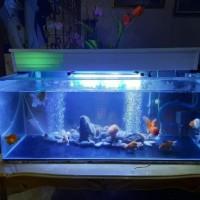 Top Filter Talang Aquarium / Filter Atas Aquarium Costum Diy Per 1Cm