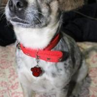 HOT SALE Bandul / liontin paw nama untuk Kalung Anjing dan Kucing