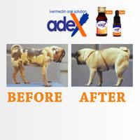 Obat demodex demodek kudis gudikan botak pada anjing sirup adex 10 ml