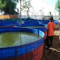 Kolam terpal bulat bioflok - Terpal Korea diameter 2m & tinggi 1m