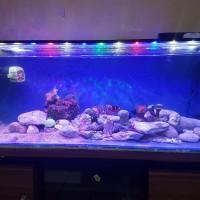 lampu aquarium hpl air laut 50cm 24watt full lensa