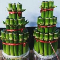 Tanaman hias bambu cina atau bambu hoki .