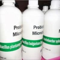 Bakteri Acetobacter Xylinum untuk Pembuatan Nata De Cas ISR7
