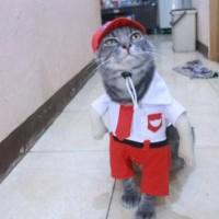 Terpopuler ! Kostum anak sekolah SD untuk kucing dan anjing lucu baju