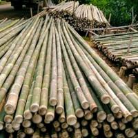 Bambu steger murah Jakarta