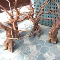 Aquascape kayu rasamala size L grade A berkualitas