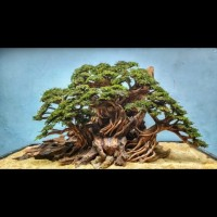 bonsai aquascape 60cm