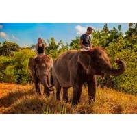 Bali Zoo Elephant Expedition Anak