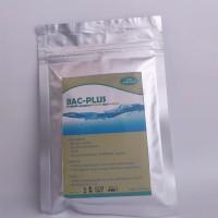 Bakteri Pengurai kolam Lele Bacillus