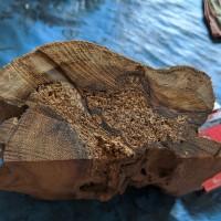 bahan kayu kelor ber galih emas super 1kg