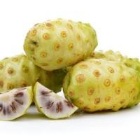 Buah mengkudu segar / Buah Noni / Buah Pace / Obat herbal alami