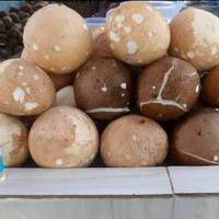 Santan kelapa parut 1 biji bisa diparut bisa langsung di peras murah