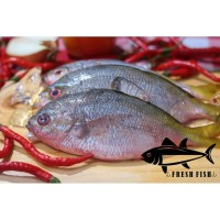 Ikan Ekor Kuning Segar