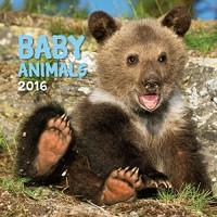 Turner Baby Animals 2016 Wall Calendar (8940006)