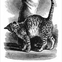 Nouvelles Images The Art of Cats Calendar - 2016 Calendar (YC 053)