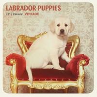 Mixed Labrador 12 Month 2016 Vintage Mini Calendar