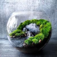 terarium mini taman mini garden hiasan dekorasi pajangan rumah
