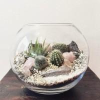 terarium mini seri kaktus taman mini garden aquarium