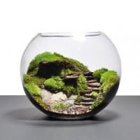 mini terarium garden set hiasan rumah pajangan dekorasitaman mini