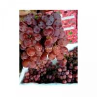 ANGUR MERAH RED GLOBE 1PAKS Buah Anggur Merah Murah