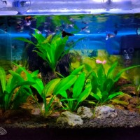 full set aquascape