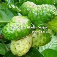 baru 1Kg Buah Mengkudu Segar / Pace / Noni - Obat Herbal