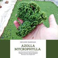Azolla Mycrophylla (Tanaman Paku Air) Pakan alternatif