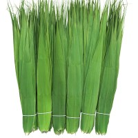 Daun Bambu China khusus bungkus Bacang / Bakcang FRESH!!!