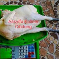 Ayam Kampung Super Premium 1.5-1.6 Kg