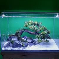 aquascape akuarium jadi full sett 60 cm/ bonsai rasamala