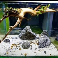 aquascape akuarium jadi full sett kura kura
