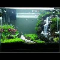 aquarium aquascape jadi full set lengkap air terjun