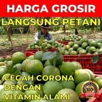 Jeruk Baby Java Malang Rasa Manis Asli Dari Petani
