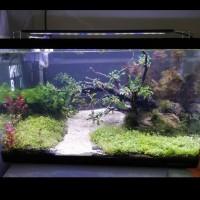 aquascape / akuarium jadi satu set tema bonsai/natural