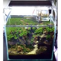 Full Set Aquarium Aquascape 30cm
