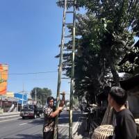 Tangga Bambu 6m