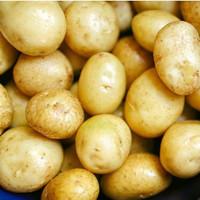 Kentang Baby / Baby Potato / Kentang Rendang 500 gram