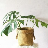 Small 20cm Bakul Purun Polos, Cover Pot Anyaman Purun, Keranjang Anyam