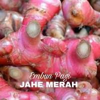 Bibit Jahe Merah Original Asli jenis Rampang besar