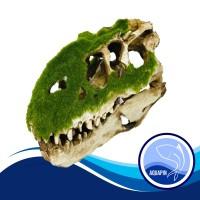 Hiasan Aquarium Kepala Dinosaurus Besar 3706