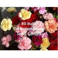 Benih Biji Carnation Mixed Color Anyelir Dianthus caryophyllus