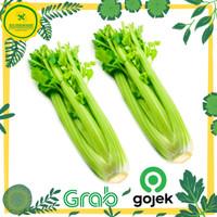 Daun Seledri / Seledri / Celery Stick Import - 1 kg