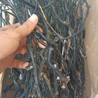 bahan gelang akar bahar hitam original