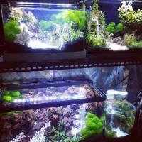 Aquarium Mini / Aquaspace Ismd.A
