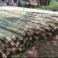 bambu apus diameter 5,67 panjang 6m