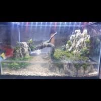paludarium / aquascape kura kura fullset jadi