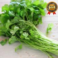 Daun Seledri / Celery Fresh 250 gram
