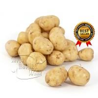 Kentang Kecil Rendang Segar / Baby Potato Fresh