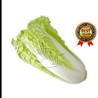 Sawi Putih fresh (sayuran ) 1kg