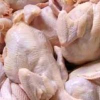 ayam potong fresh & segar